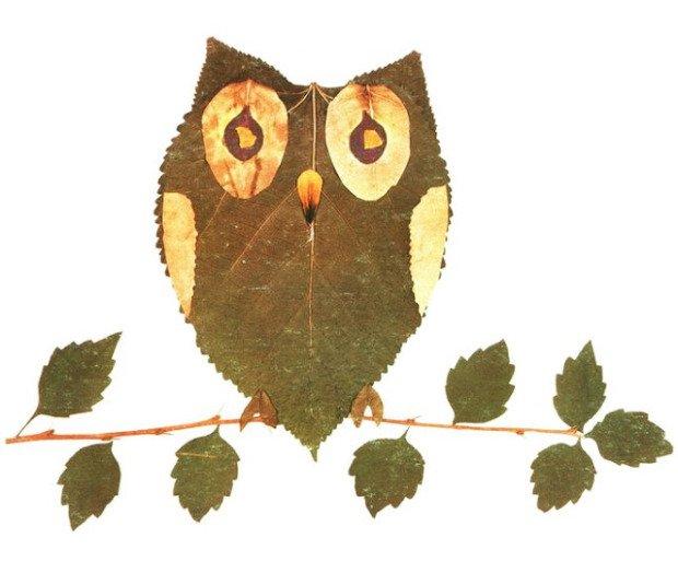 leaf_owl-620x513