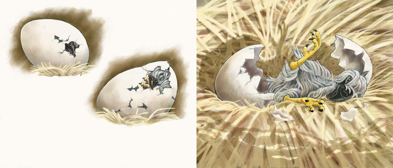 children's book illustration of baby eagle by Andrea Gabriel