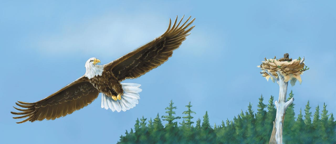 children's book illustration of baby eagle bear by Andrea Gabriel