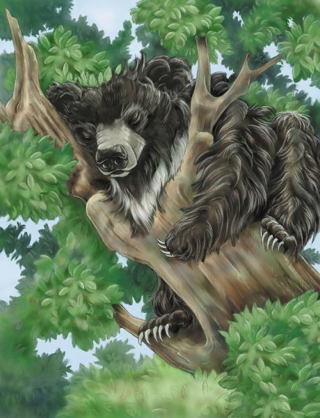children's book illustration of sleeping bear by Andrea Gabriel