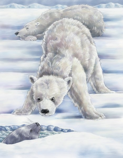 children's book illustration of baby polar bear by Andrea Gabriel