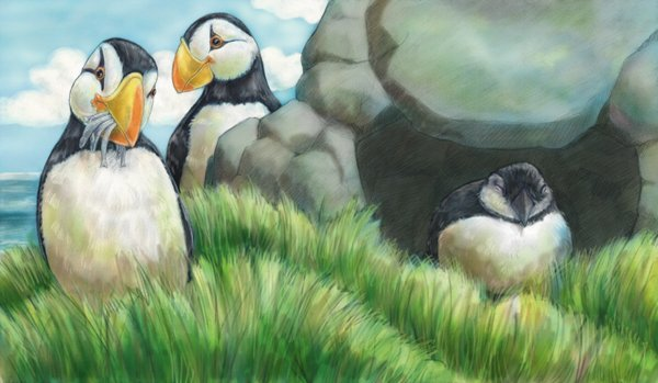children's book illustration of puffins by Andrea Gabriel