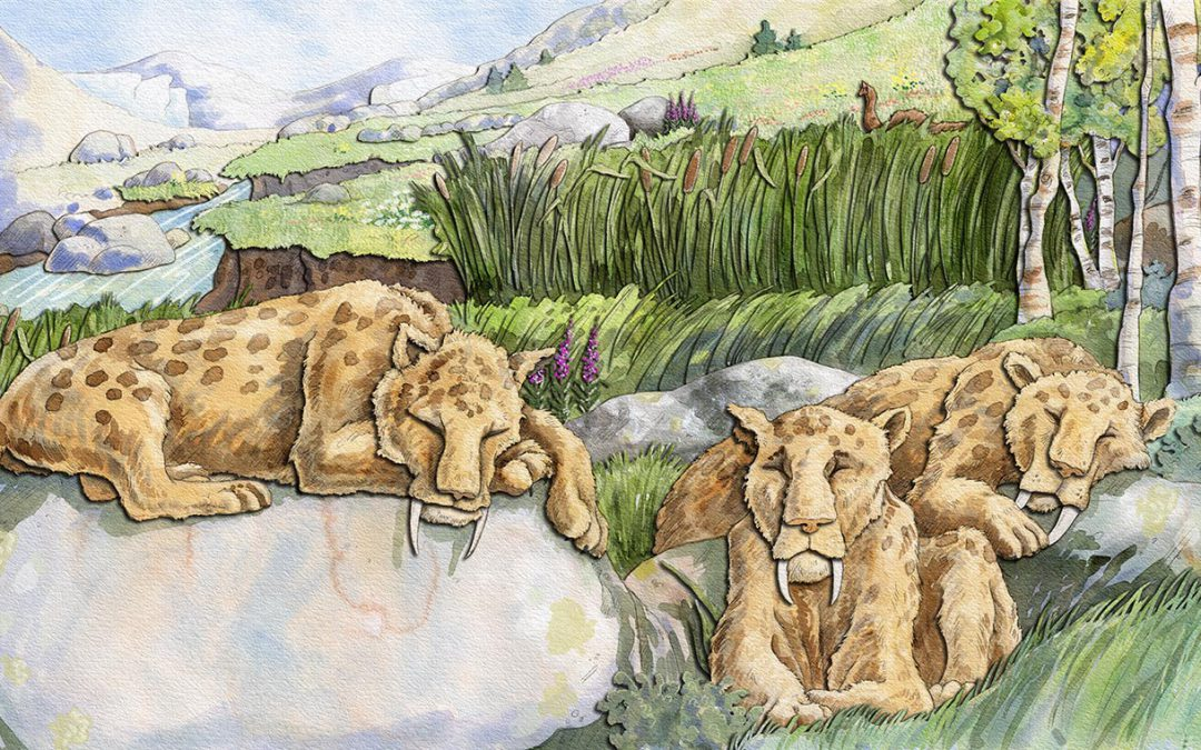 Saber-tooth Cats