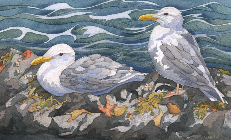 painting of two seagulls by Andrea Gabriel