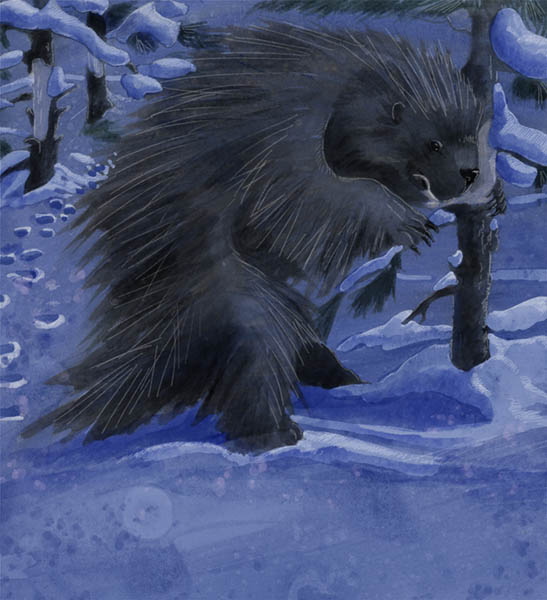 bad painting of porcupine eating bark - first draft