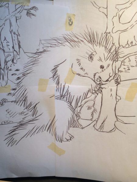 sketch of porcupine eating bark