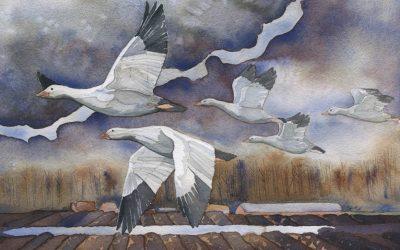 Geese in the Skagit
