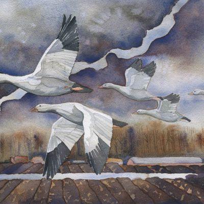 watercolor painting of skagit snow geese