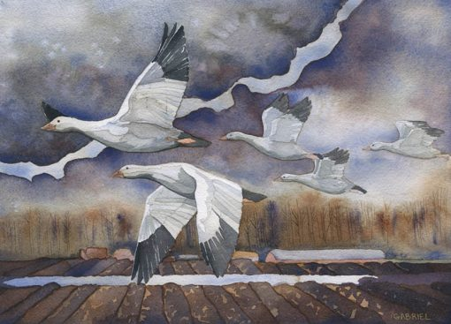 watercolor painting of skagit snow geese