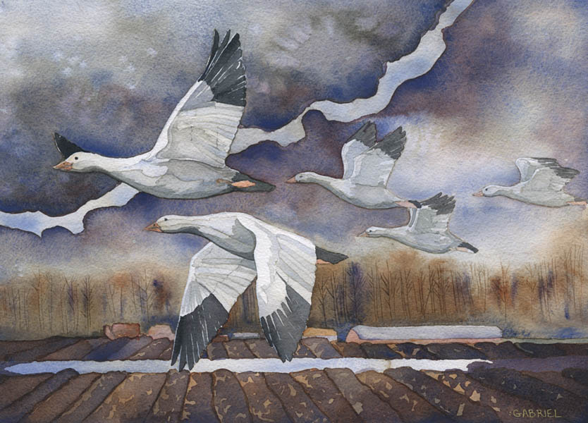 water color painting of geese in the skagit valley
