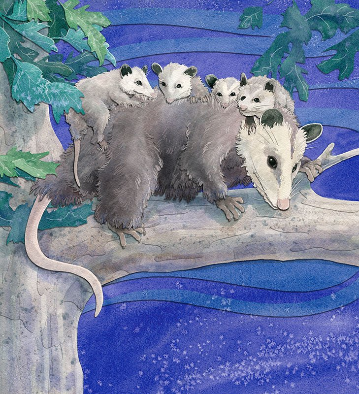 children's book illustration by Andrea Gabriel featuring a mama possum