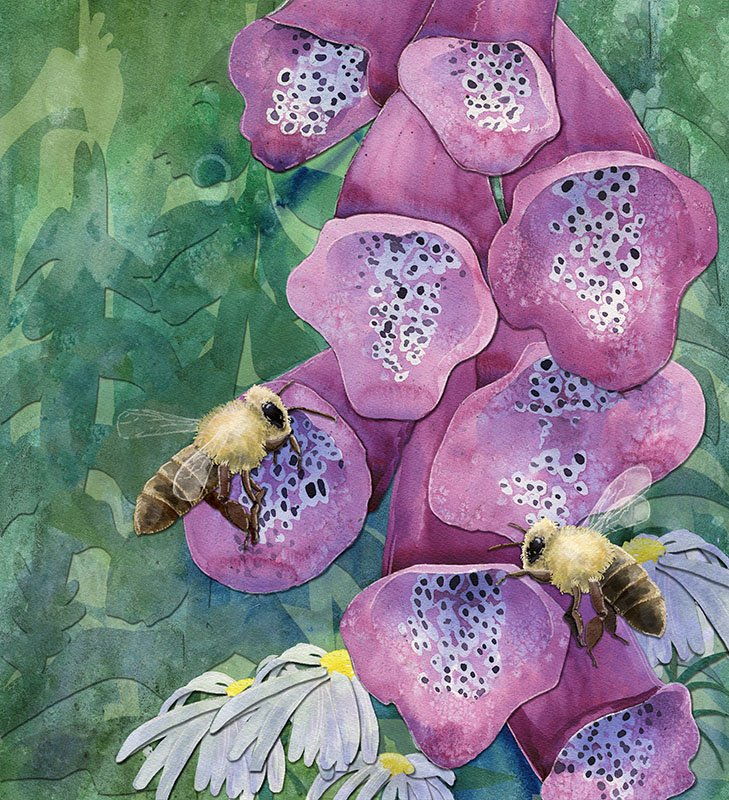children's book illustration by Andrea Gabriel featuring bees and foxglove