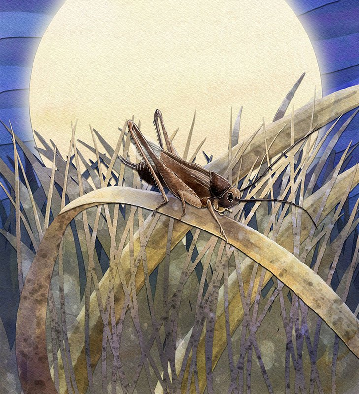 children's book illustration of cricket on grass stalks in the moonlight
