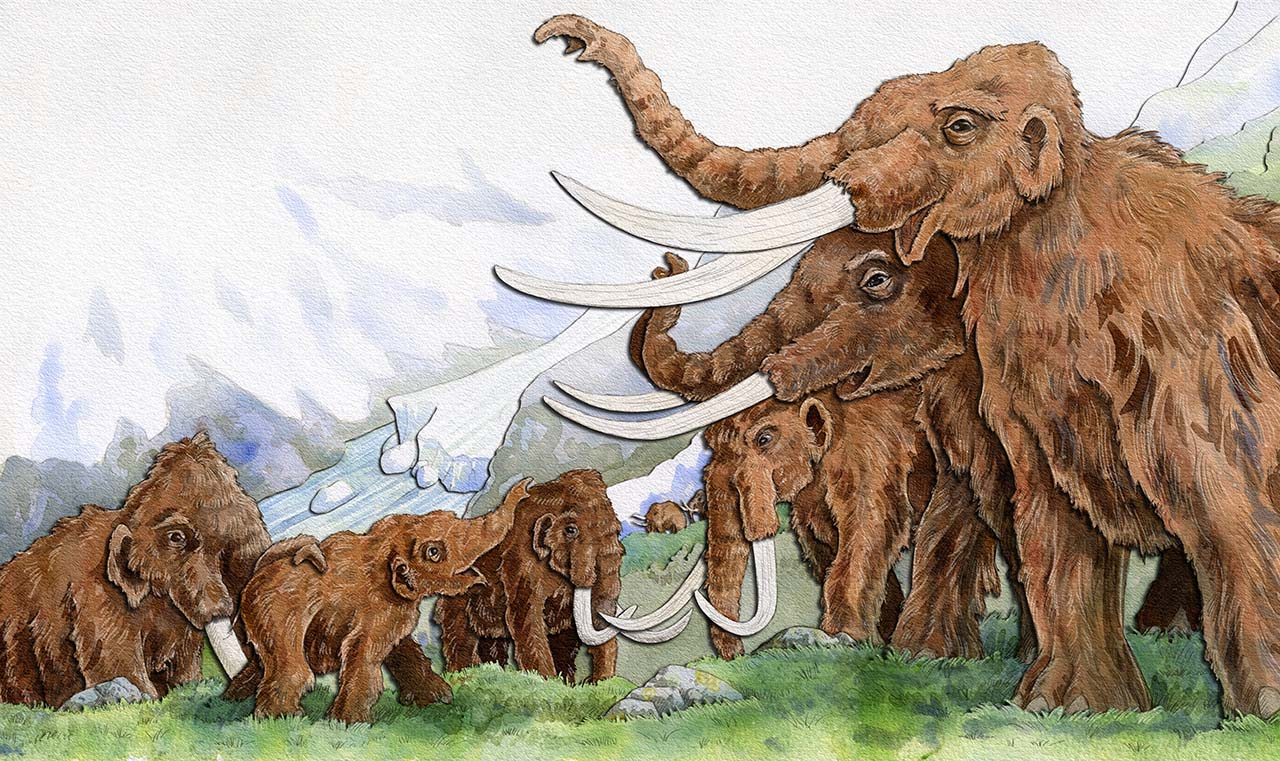 children's book illustration of baby woolly being greeted by herd