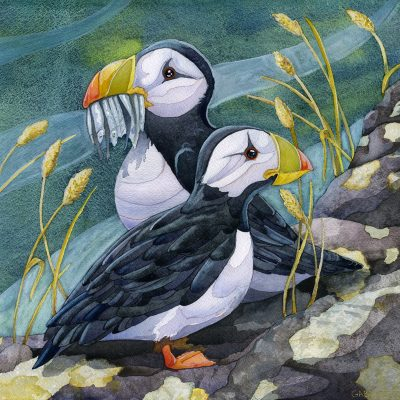 watercolor puffin painting by children's book illustrator andrea gabriel