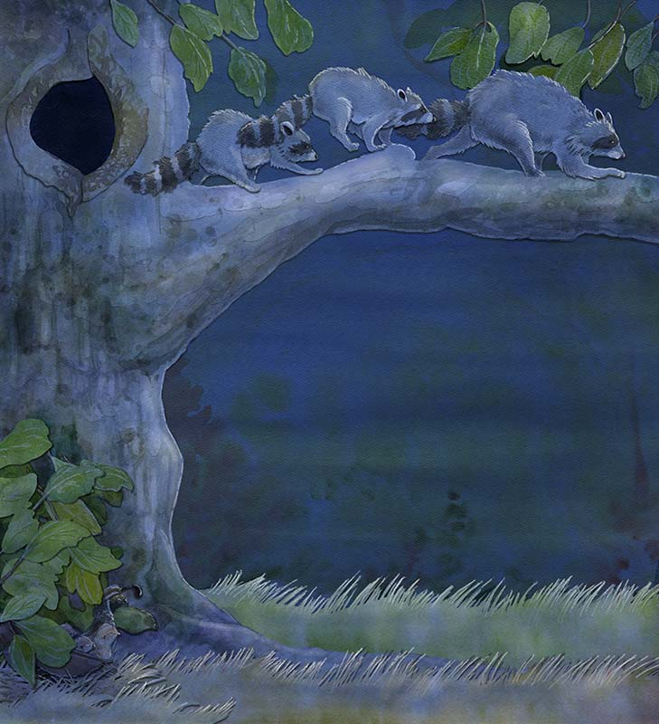 children's book illustration of raccoons leaving the den at night on a tree branch