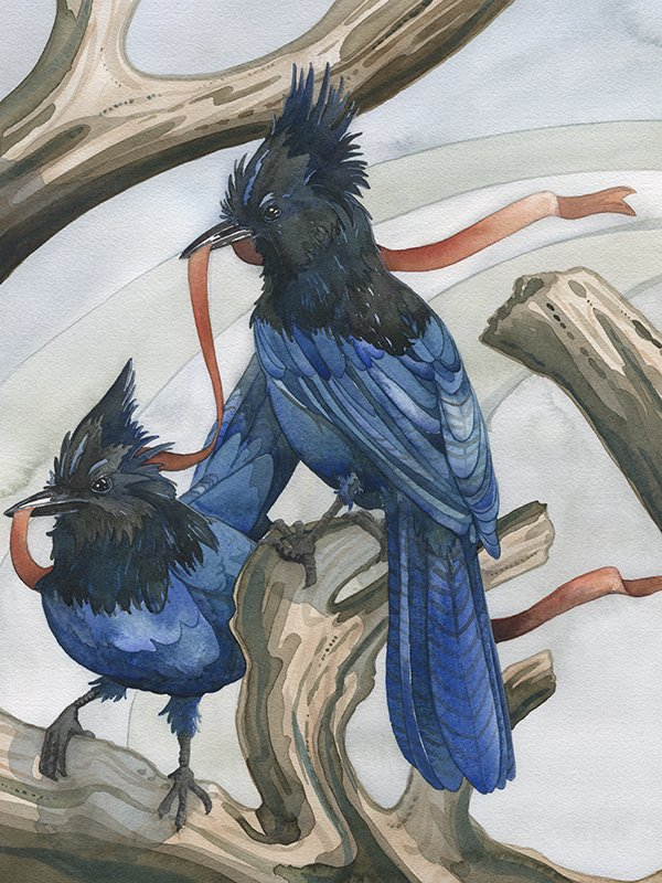 two steller's jays holding an orange ribbon - bird art by andrea gabriel