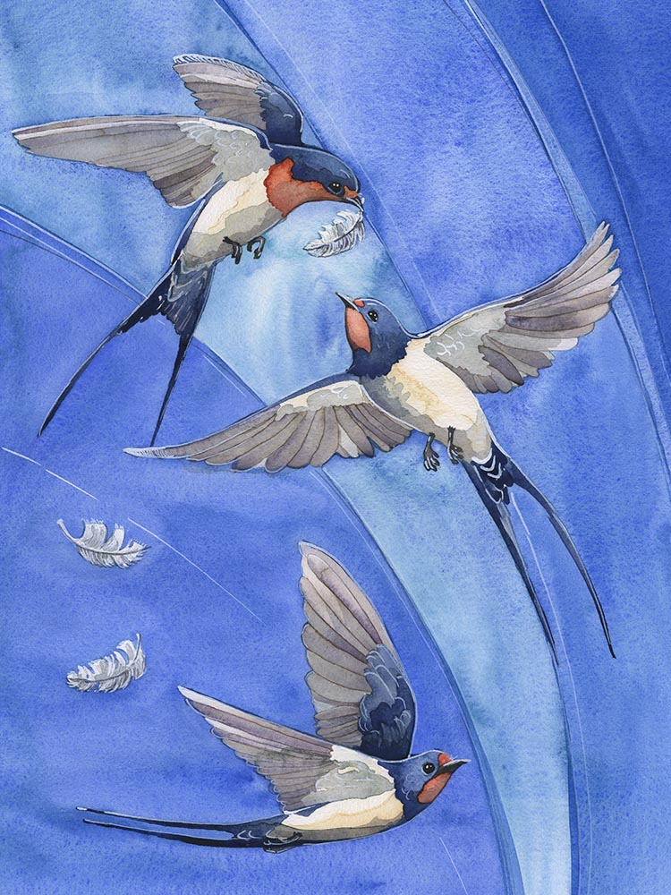 barn swallow feather game by andrea gabriel