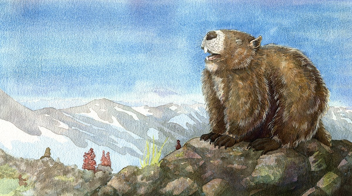 watercolor painting of marmot on top of a mountain