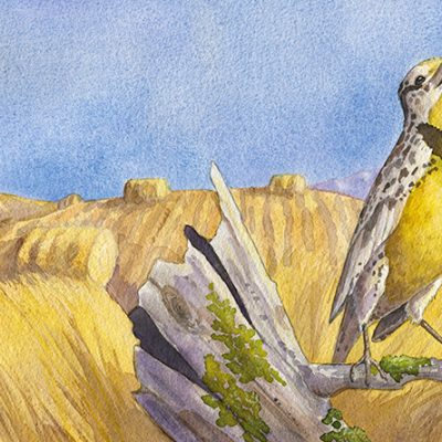 watercolor painting of a singing meadowlark