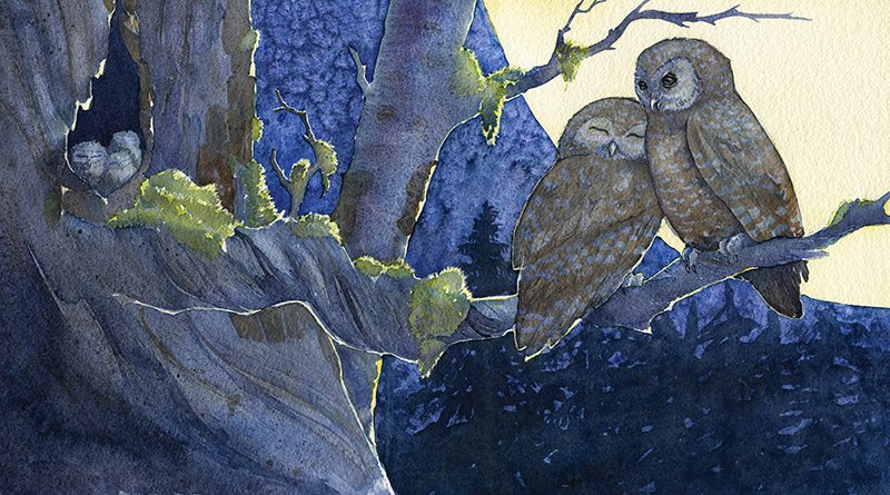 two owls on a branch watercolor painting